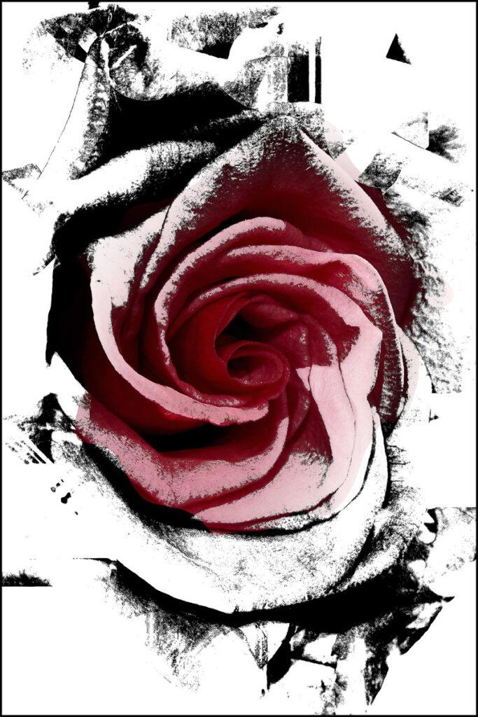 Il-lusionografies florals
